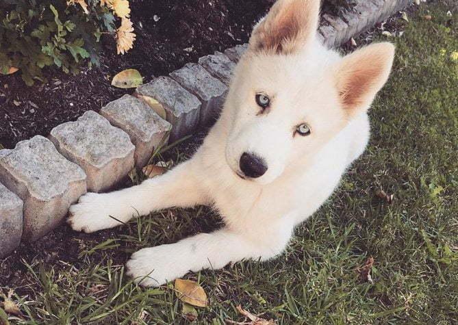 Karrueche Tran dog